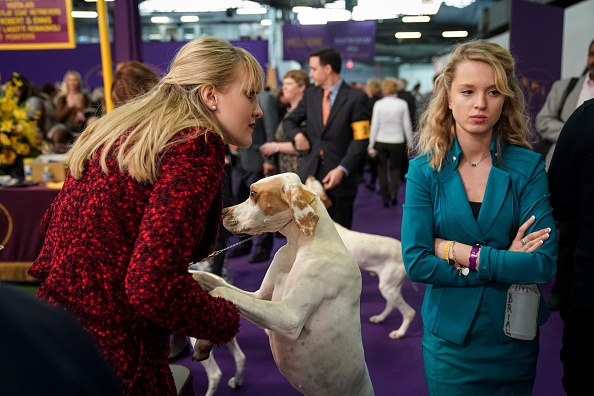 Waiting「Annual Westminster Dog Show Takes Place In New York City」:写真・画像(5)[壁紙.com]
