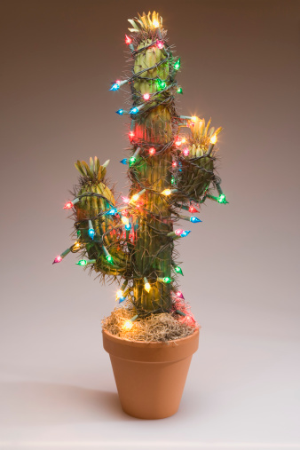 Annual Event「Cactus decorated with Christmas lights」:スマホ壁紙(15)