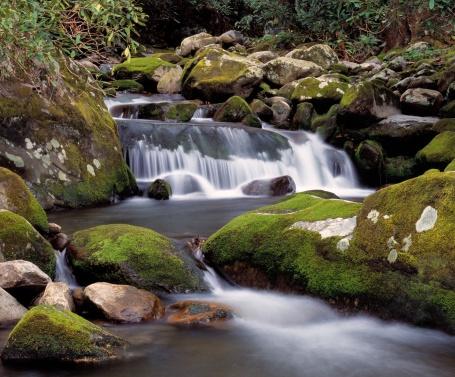 Roaring Fork River「The Roaring Fork River rushes through forest over moss covered rocks」:スマホ壁紙(1)