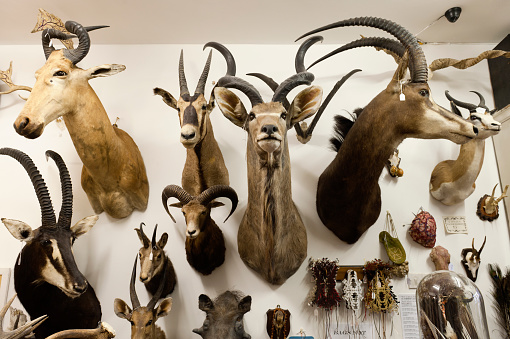人物「Taxidermy collection at the Little Shop of Horrors in London Hackney」:スマホ壁紙(16)