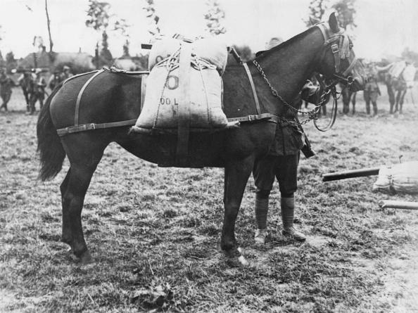 One Animal「Pack Horse」:写真・画像(2)[壁紙.com]