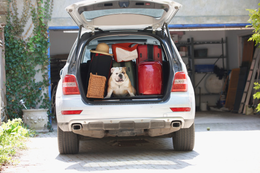 旅行「Dog in back of car packed for vacation」:スマホ壁紙(0)