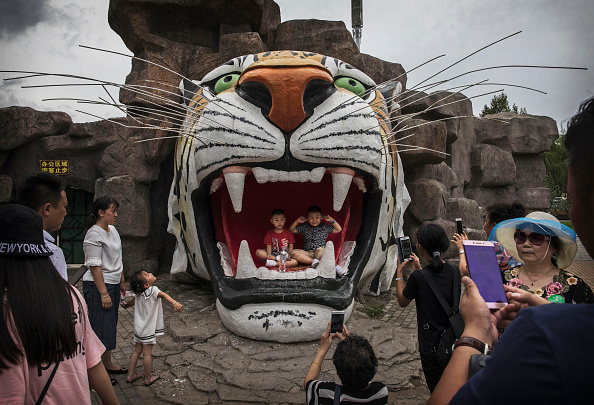 Wilderness Area「China's Siberian Tiger Farm」:写真・画像(17)[壁紙.com]