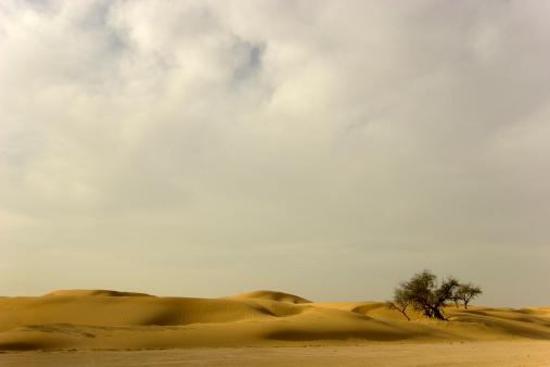 Single Tree「Desert tree and clouds」:スマホ壁紙(16)