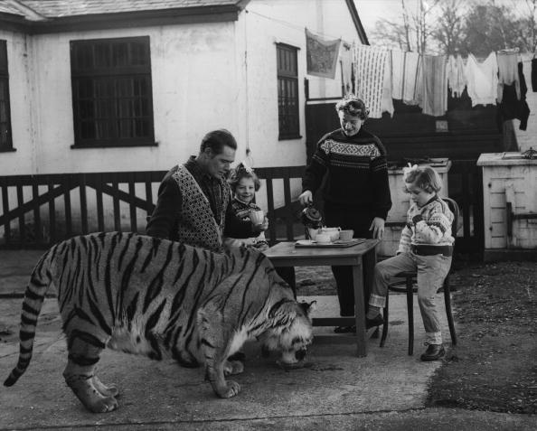 Big Cat「Kerr Family」:写真・画像(17)[壁紙.com]
