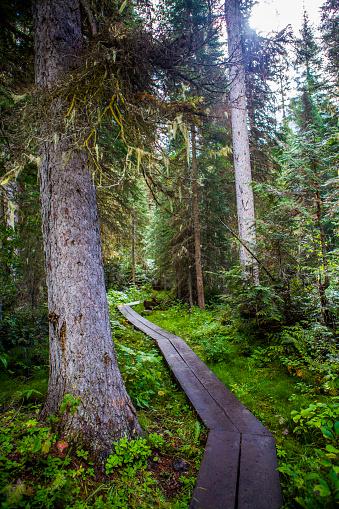 Yoho National Park「Wooden boardwalk in forest」:スマホ壁紙(0)