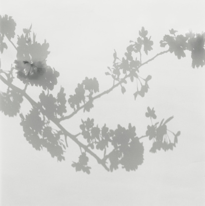 Cherry Blossoms「Shadow of cherry blossoms on wall」:スマホ壁紙(3)