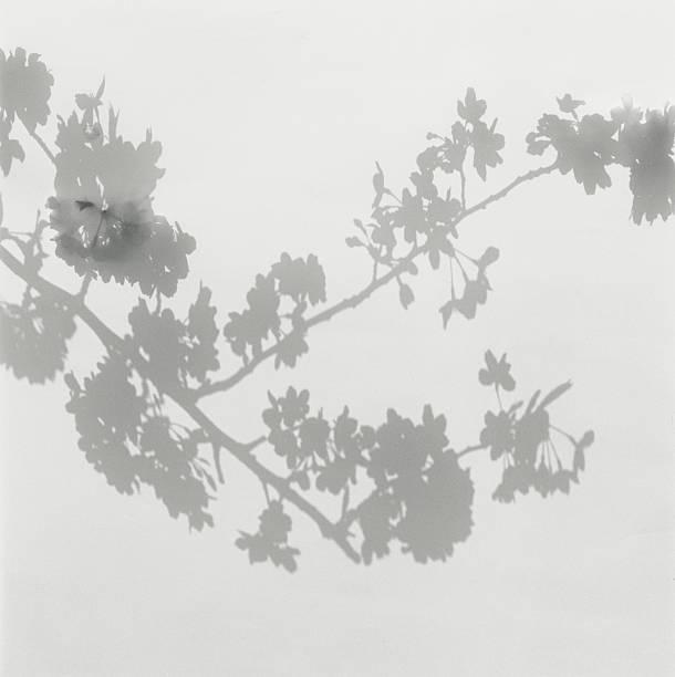 Shadow of cherry blossoms on wall:スマホ壁紙(壁紙.com)