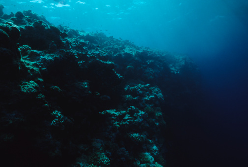 自生「Dead Reef」:スマホ壁紙(16)