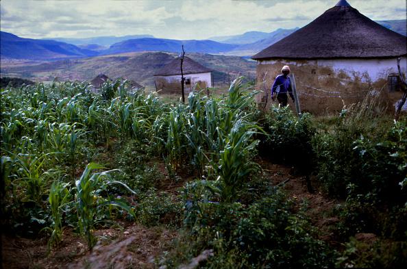 Agriculture「Transkei」:写真・画像(8)[壁紙.com]