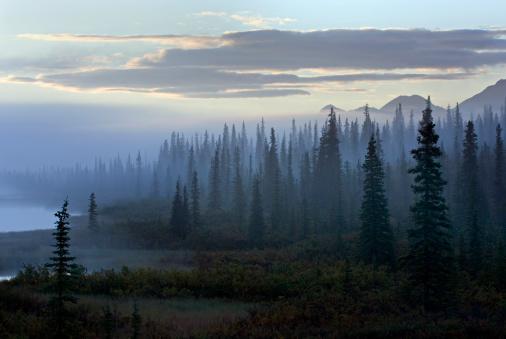 Boreal Forest「Morning fog over boreal forest. Alaska. USA」:スマホ壁紙(6)