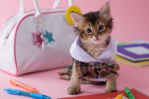 子猫「Somali Kitten and Stationery」:スマホ壁紙(0)