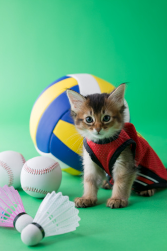 Kitten「Somali Kitten and Sports」:スマホ壁紙(3)