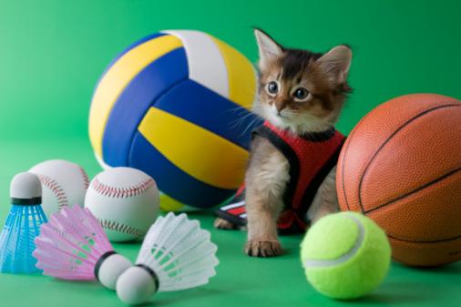 スポーツ用品「Somali Kitten and Sports」:スマホ壁紙(4)