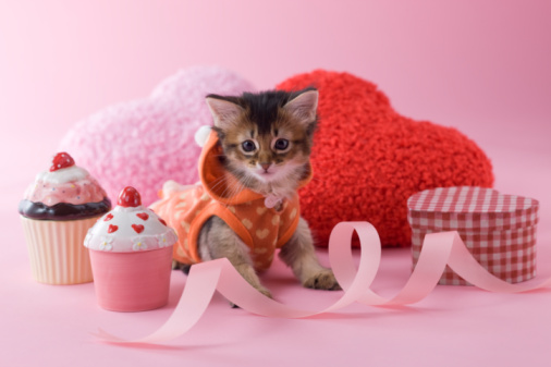Kitten「Somali Kitten and Heart Shaped Ornaments」:スマホ壁紙(5)