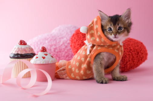 Kitten「Somali Kitten and Heart Shaped Ornaments」:スマホ壁紙(4)