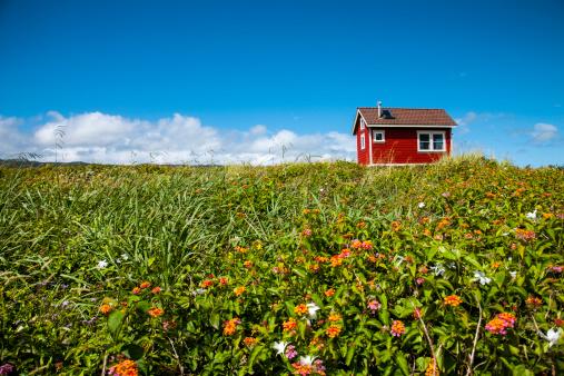 Wildflower「Little red house in green field」:スマホ壁紙(2)