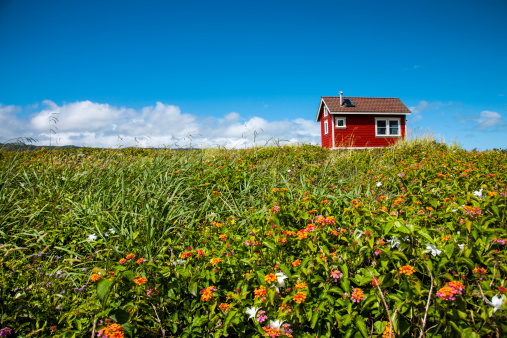 Wildflower「Little red house in green field」:スマホ壁紙(16)