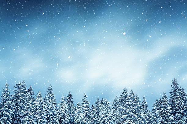 冬の森:スマホ壁紙(壁紙.com)