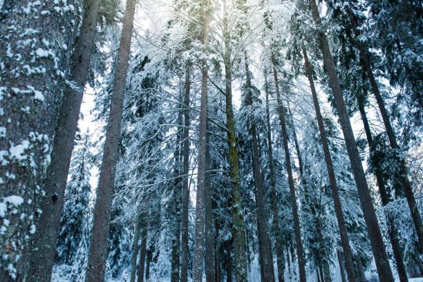 Winter Forest in Alps:スマホ壁紙(壁紙.com)