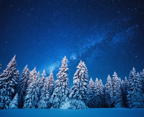 星空「星空の冬の森」:スマホ壁紙(9)