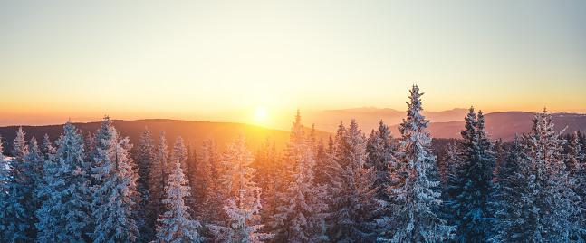 Wilderness Area「Winter Forest At Sunset」:スマホ壁紙(0)