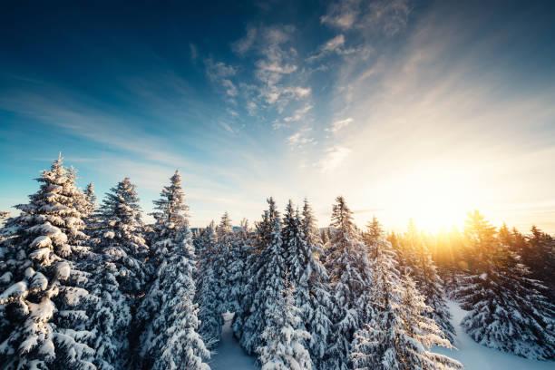 Winter Forest At Sunrise:スマホ壁紙(壁紙.com)