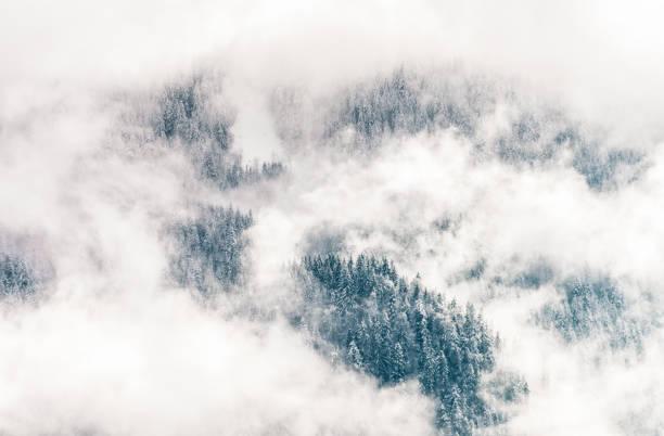 Winter forest shrouded in mist:スマホ壁紙(壁紙.com)