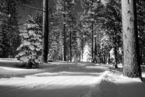 雪「冬の森」:スマホ壁紙(18)