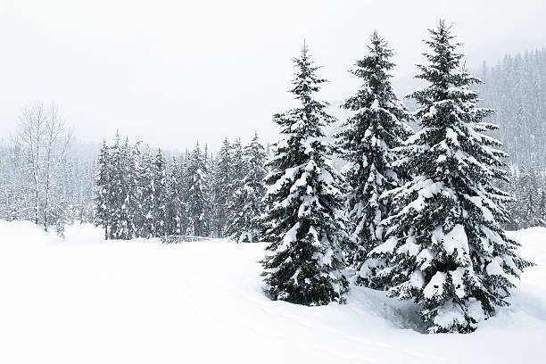 XL winter forest blizzard:スマホ壁紙(壁紙.com)