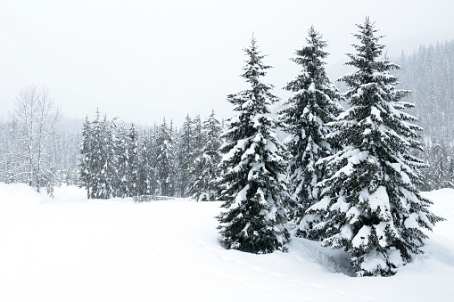 British Columbia「XL winter forest blizzard」:スマホ壁紙(4)