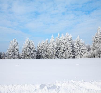 雪山「冬の森」:スマホ壁紙(2)