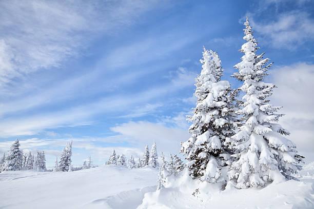 Winter Forest:スマホ壁紙(壁紙.com)