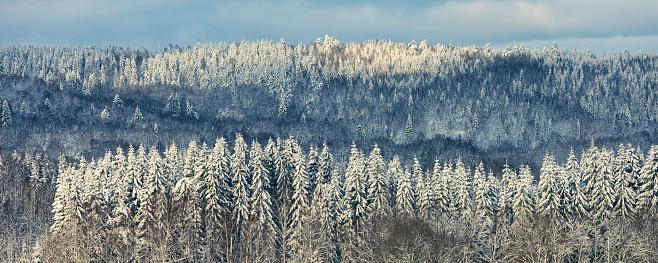 Boreal Forest「Winter forest」:スマホ壁紙(12)