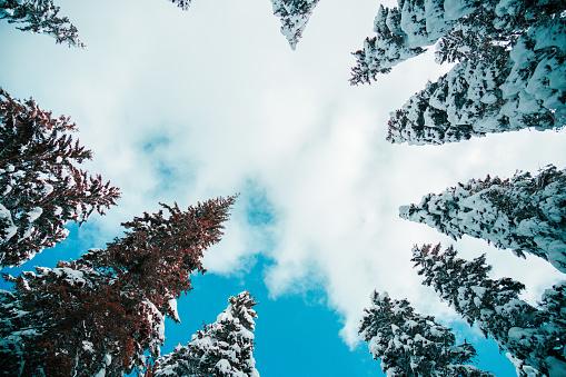 Fairy Tale「Winter forest」:スマホ壁紙(14)