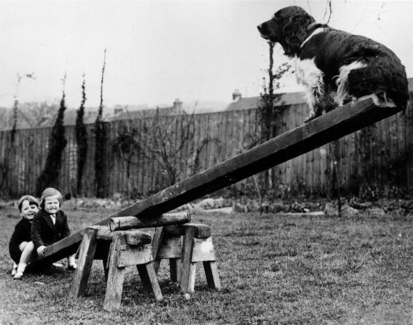 Balance「See-Saw Dog」:写真・画像(19)[壁紙.com]