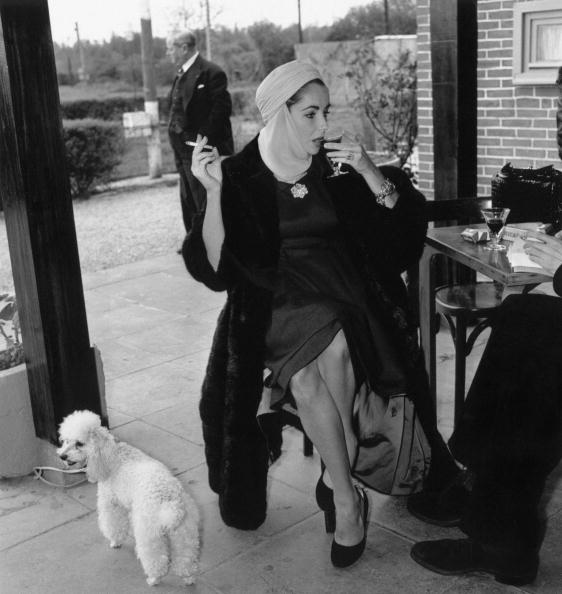 Actress「Taylor And Poodle」:写真・画像(1)[壁紙.com]