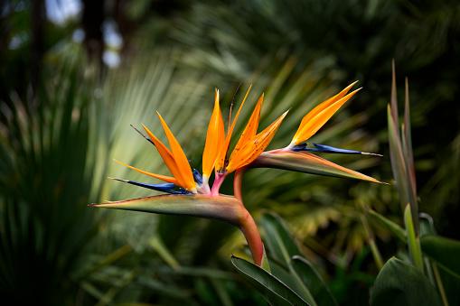 Flower Head「Bird of Paradise」:スマホ壁紙(5)