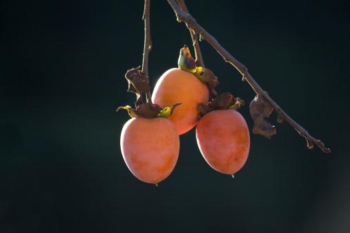 柿「Persimmon」:スマホ壁紙(5)