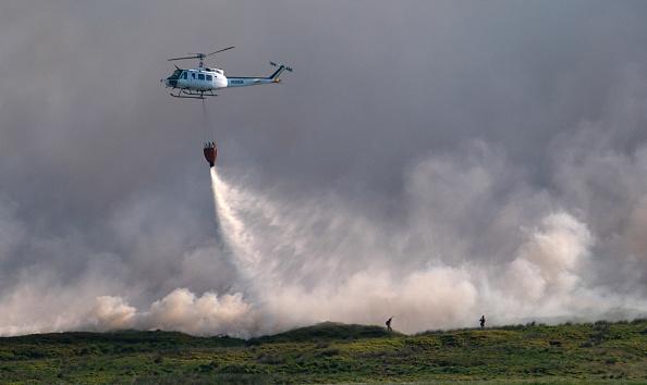 イネ科「Winter Hill Fire Declared Major Incident」:写真・画像(15)[壁紙.com]