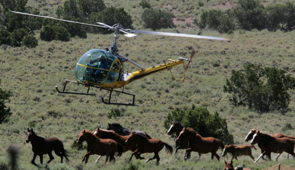 Horse「Bureau Of Land Management Rounds Up Wild Horses」:写真・画像(0)[壁紙.com]