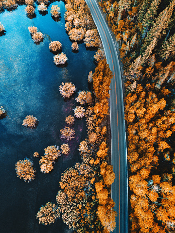 USA「helicopter view of the pine forest along a lake」:スマホ壁紙(7)