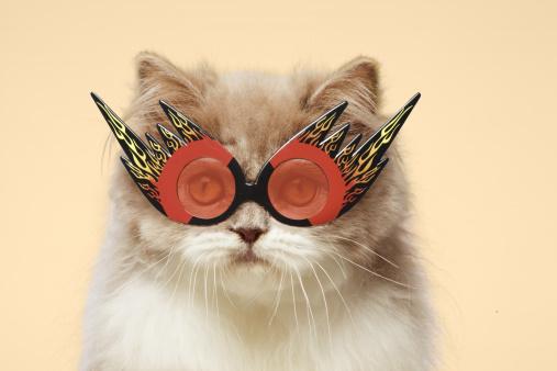 Eyewear「Persian Cat wearing Flaming Eye Glasses」:スマホ壁紙(12)
