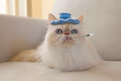 Cat「Persian Cat with Hot Water Bottle and Thermometer」:スマホ壁紙(13)