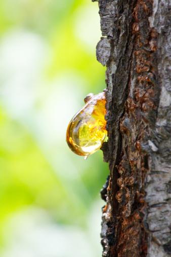 カリン「Close up of amber yellow resin drop from queen-app」:スマホ壁紙(14)
