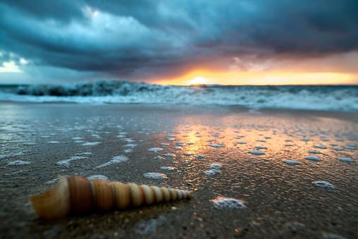 cloud「Close up of long thin twisty cone shell on beach at dawn, Oahu, Hawaii, USA」:スマホ壁紙(12)