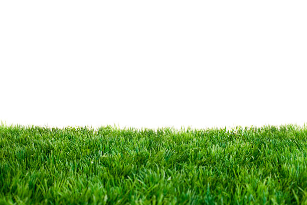 Close up of green grass with white background:スマホ壁紙(壁紙.com)