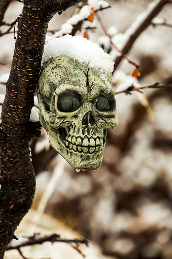 ハロウィン「Close up of a skull (Halloween decoration) in a tree snow topped with water drops dripping」:スマホ壁紙(15)