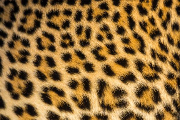 Close up of leopards (Panthera pardus) fur:スマホ壁紙(壁紙.com)