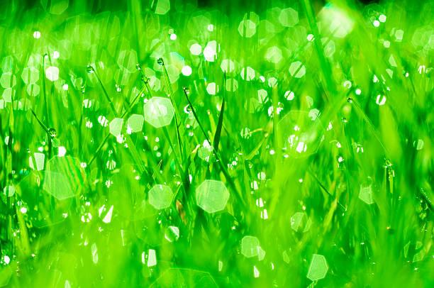 Close up of dew drops on lush blades of grass:スマホ壁紙(壁紙.com)